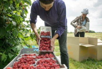 Поиск работы в Польше без знания языка: особенности и советы